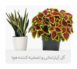 Send Air Conditioner Flowers to Iran